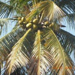 Отель Coco Cabana Шри-Ланка, Бентота - отзывы, цены и фото номеров - забронировать отель Coco Cabana онлайн пляж