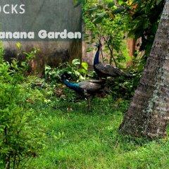 Отель Banana Garden фото 2