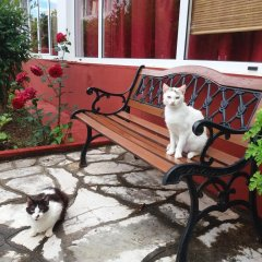 Semeli Hotel- Adults Only с домашними животными