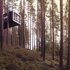 Tree Hotel 5* Бунгало с различными типами кроватей фото 6