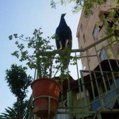 Отель Jaipur Inn фото 9