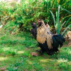 Эко-отель Озеро Дивное с домашними животными