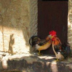 Отель Viviendas El Barrio Тресвисо с домашними животными