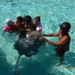 Отель Tiahura Dream Lodge Французская Полинезия, Муреа - отзывы, цены и фото номеров - забронировать отель Tiahura Dream Lodge онлайн бассейн фото 3