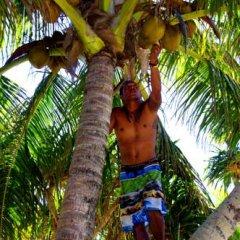 Отель Bamboo Backpackers Фиджи, Вити-Леву - отзывы, цены и фото номеров - забронировать отель Bamboo Backpackers онлайн фото 6