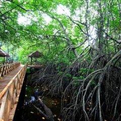 Отель Riverdale Eco Resort Шри-Ланка, Берувела - отзывы, цены и фото номеров - забронировать отель Riverdale Eco Resort онлайн приотельная территория