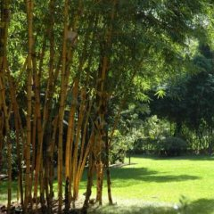 Отель Quinta da Bela Vista Португалия, Фуншал - отзывы, цены и фото номеров - забронировать отель Quinta da Bela Vista онлайн фото 7