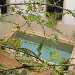 Отель Riad Tajpa Марокко, Марракеш - отзывы, цены и фото номеров - забронировать отель Riad Tajpa онлайн балкон