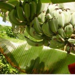 Отель Golden Palms Retreat Фиджи, Вити-Леву - отзывы, цены и фото номеров - забронировать отель Golden Palms Retreat онлайн фото 10