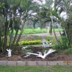 Отель Golden Palms Retreat Фиджи, Вити-Леву - отзывы, цены и фото номеров - забронировать отель Golden Palms Retreat онлайн фото 9