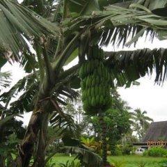 Отель Golden Palms Retreat Фиджи, Вити-Леву - отзывы, цены и фото номеров - забронировать отель Golden Palms Retreat онлайн фото 8