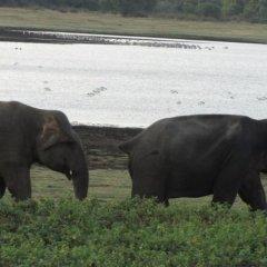 Savinrose Safari Hotel с домашними животными