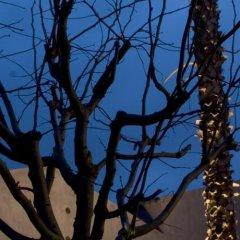 Отель Caol Ishka Hotel Италия, Сиракуза - отзывы, цены и фото номеров - забронировать отель Caol Ishka Hotel онлайн развлечения
