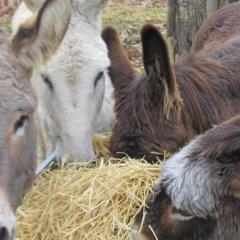 Отель Estalagem Portas de Rodao с домашними животными