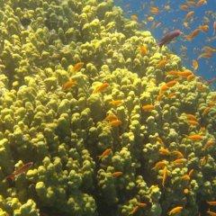 Отель Red Sea Dive Center фото 7