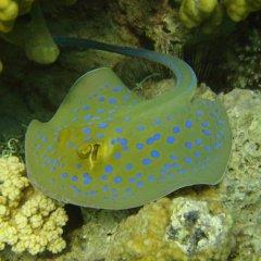 Отель Red Sea Dive Center фото 8
