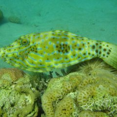 Отель Red Sea Dive Center фото 5