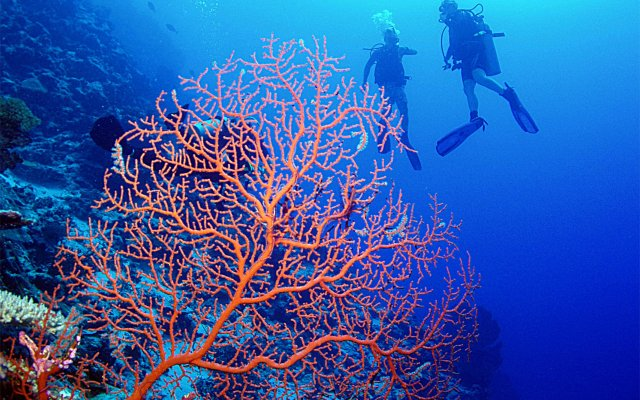 Image result for Beqa Lagoon Island diving