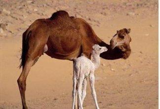 Bivouac Morocco Safari Tours