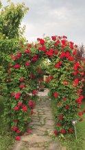 Residence delle Rose