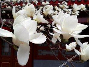Scholar Tree Courtyard Hotel(beijing Hebei Guest Hotel)