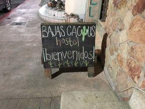 Baja's Cactus Hostel