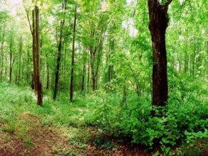 Eco Complex Sherba