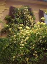 Al Giardino delle Rose