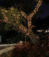 Rootsvilla Hostel Goa