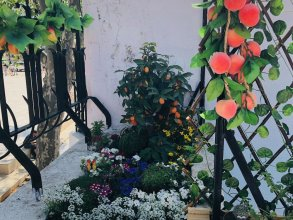 Cascais Terrace Fruit Point - Hostel
