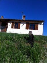 Cottage Canonica