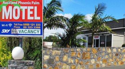 Auckland Phoenix Palm