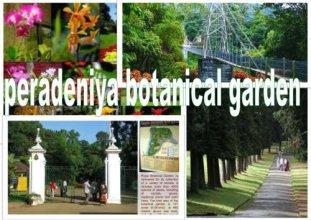 Greenwood Kandy Homestay