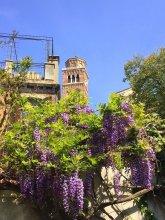 Primaluce Venice