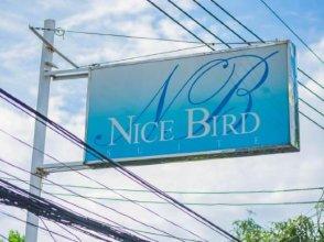 Nice Bird Suite