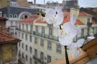 Rent4days Browns Deluxe Apartments in Baixa