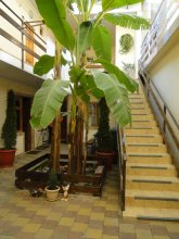 Afalina Guest House